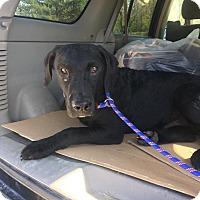 Adopt A Pet :: Tucker - Loogootee, IN