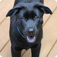 Adopt A Pet :: Louis - McDonough, GA
