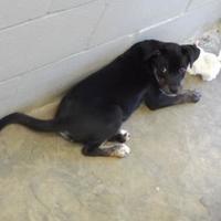 Adopt A Pet :: Tara - Amory, MS