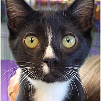 Adopt A Pet :: Logan - Key Largo, FL