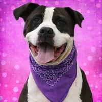 Adopt A Pet :: Izzy - Cincinnati, OH