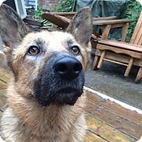Adopt A Pet :: Kekoa - Portland, OR