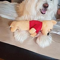Adopt A Pet :: Brady - Cambridge, ON