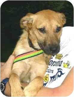 Retriever (Unknown Type) Mix Dog for adoption in Kingwood, Texas - Bonnie