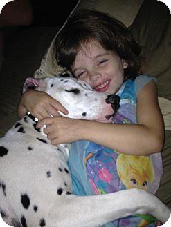Dalmatian Puppy for adoption in Council Bluffs, Iowa - Oreo