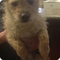 Adopt A Pet :: Liam - Oceanside, CA
