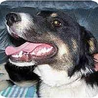 Adopt A Pet :: BULLET - YERINGTON, NV