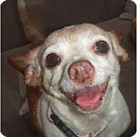 Adopt A Pet :: Piglet - Chimayo, NM