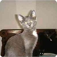 Adopt A Pet :: Meeps - Scottsdale, AZ