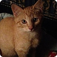 Adopt A Pet :: Pumpkin! - Wenatchee, WA