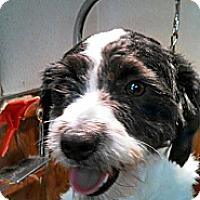 Adopt A Pet :: R.I. OREO - W. Warwick, RI