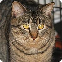 Adopt A Pet :: Dawn - Torrance, CA