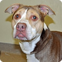 Adopt A Pet :: Tucker - Port Washington, NY