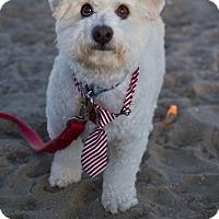 Adopt A Pet :: Valentino - Orange, CA