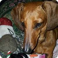 Adopt A Pet :: Wanda Wiesmann - Houston, TX