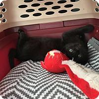 Adopt A Pet :: Oliver - Monroe, NC