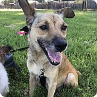 Adopt A Pet :: Emma - Tumwater, WA