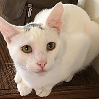 Adopt A Pet :: Albus - Buhl, ID