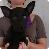 Adopt A Pet :: JIMMY - Corona, CA