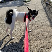 Adopt A Pet :: Brady - Bronx, NY