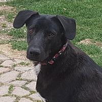Adopt A Pet :: Pam - Winnipeg, MB