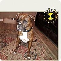 Adopt A Pet :: Emoji - Hurst, TX