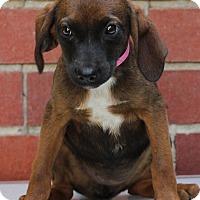 Adopt A Pet :: Christie - Waldorf, MD
