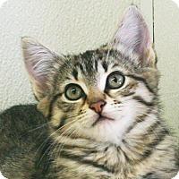Adopt A Pet :: Taco - Republic, WA