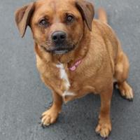 Adopt A Pet :: Cocoa - Manitowoc, WI