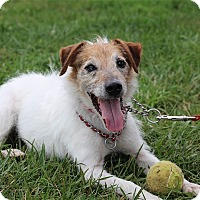Adopt A Pet :: Eddie - Elyria, OH
