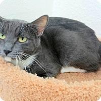 Adopt A Pet :: Tula - Casa Grande, AZ