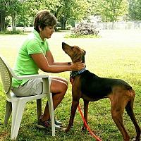 Adopt A Pet :: Pluto - Avon, OH