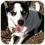 Photo 1 - Australian Cattle Dog/Rat Terrier Mix Dog for adoption in petaluma, California - Jordan