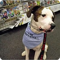 Adopt A Pet :: Louie - Indianapolis, IN