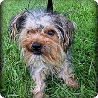 Adopt A Pet :: Tara - Suwanee, GA