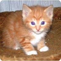 Adopt A Pet :: Dandelion - Kirkwood, DE