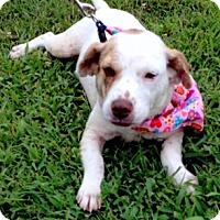 Adopt A Pet :: AVA - Leland, MS