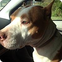 Adopt A Pet :: Karma - Vidor, TX
