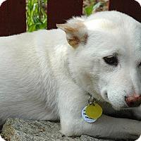 Adopt A Pet :: Haru - Centennial, CO