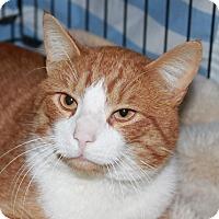 Adopt A Pet :: Farley - North Branford, CT