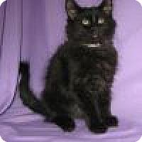 Adopt A Pet :: Aurora - Powell, OH