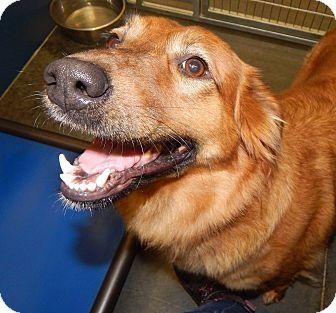 Border Collie Mix Dog for adoption in Henderson, North Carolina - Judy