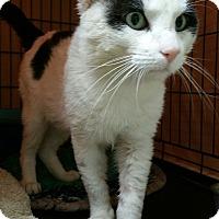 Adopt A Pet :: Bruiser - Chisholm, MN