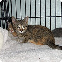 Adopt A Pet :: MILLY - Medford, WI