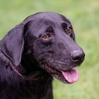 Adopt A Pet :: August - Brattleboro, VT