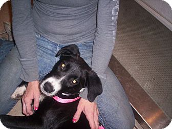 Border Collie Mix Dog for adoption in Madison, Florida - Girl