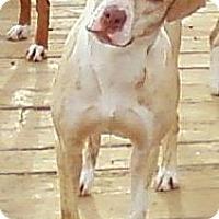 Adopt A Pet :: Twirl - Toledo, OH