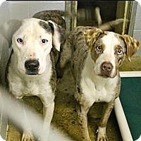 Adopt A Pet :: WHIRL-JJ - Roundup, MT
