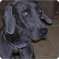 Adopt A Pet :: Shadow **ADOPTED** - Eustis, FL