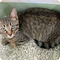 Adopt A Pet :: Camden - Riverhead, NY